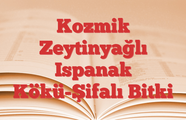 Kozmik Zeytinyağlı Ispanak Kökü-Şifalı Bitki