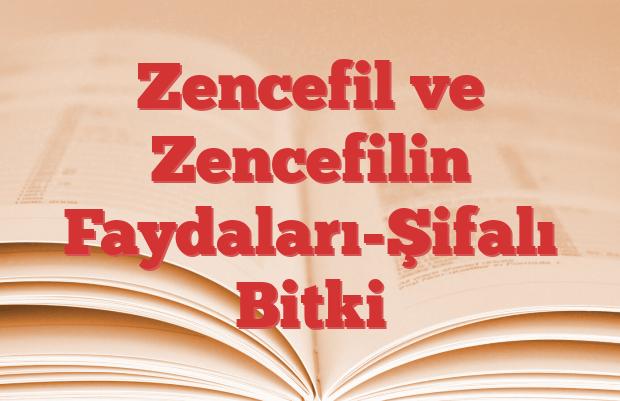 Zencefil ve Zencefilin Faydaları-Şifalı Bitki